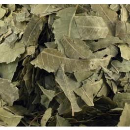 Feuilles de neem biologiques