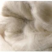 Baby chameau blanc