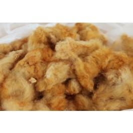 Coton-graine biologique de couleur naturelle