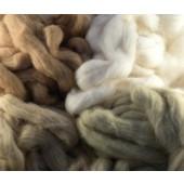 Coton biologique de couleur naturelle